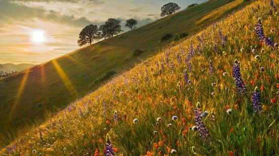 field-of-wildflowers-16778